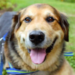 Common Signs of Hip Dysplasia in Dogs