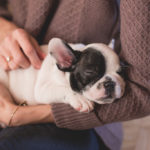 Common Signs of Hip Dysplasia in Puppies