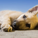 The Top 5 Ways Supplements help Rescue Pets